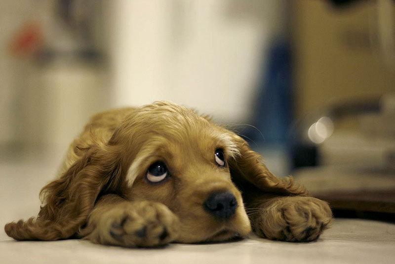 Cachorrinho Triste